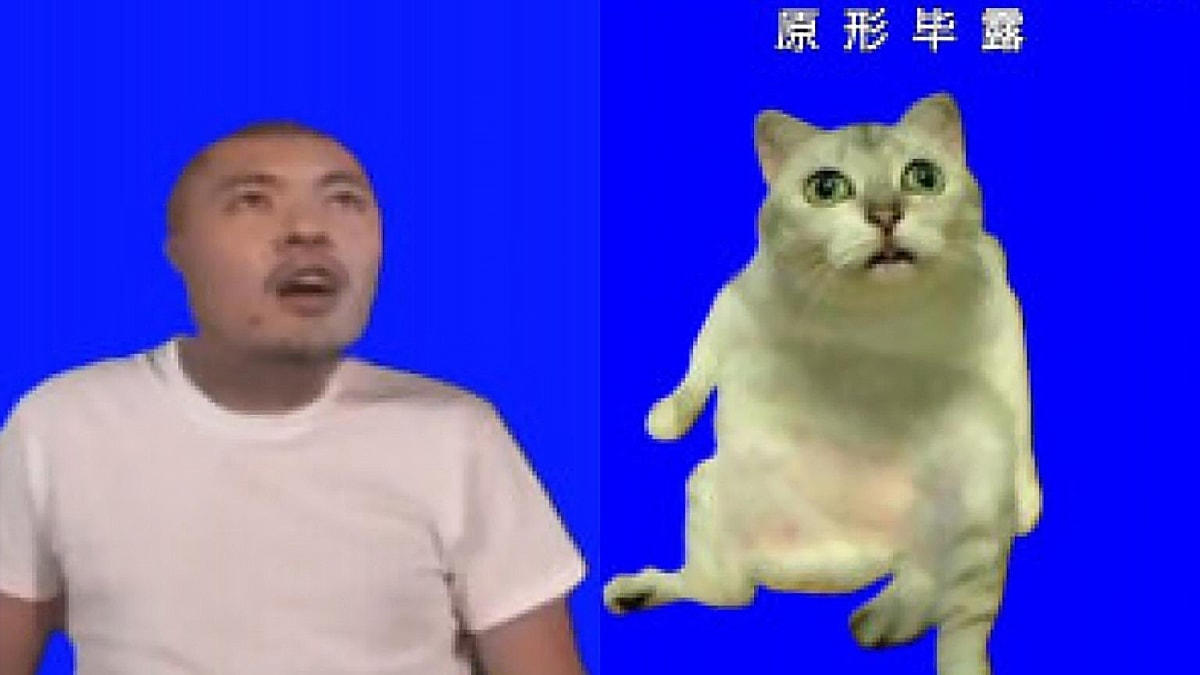 Mur Cat MUR猫 Minamoto Fran uploaded a video with a modified and distorted picture of this cat and MUR (Miura) character - MUR Cat Meme Definition and Huge Clothes Compilation Orezoria Blog